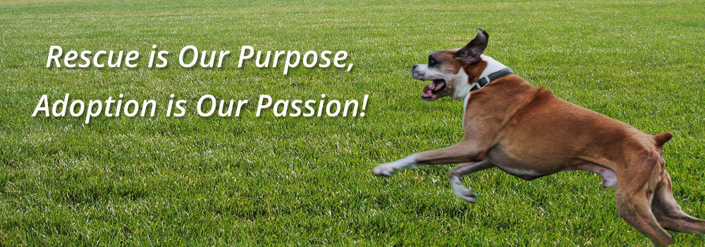 Rescue is our Purpose, Adoption is our Passion